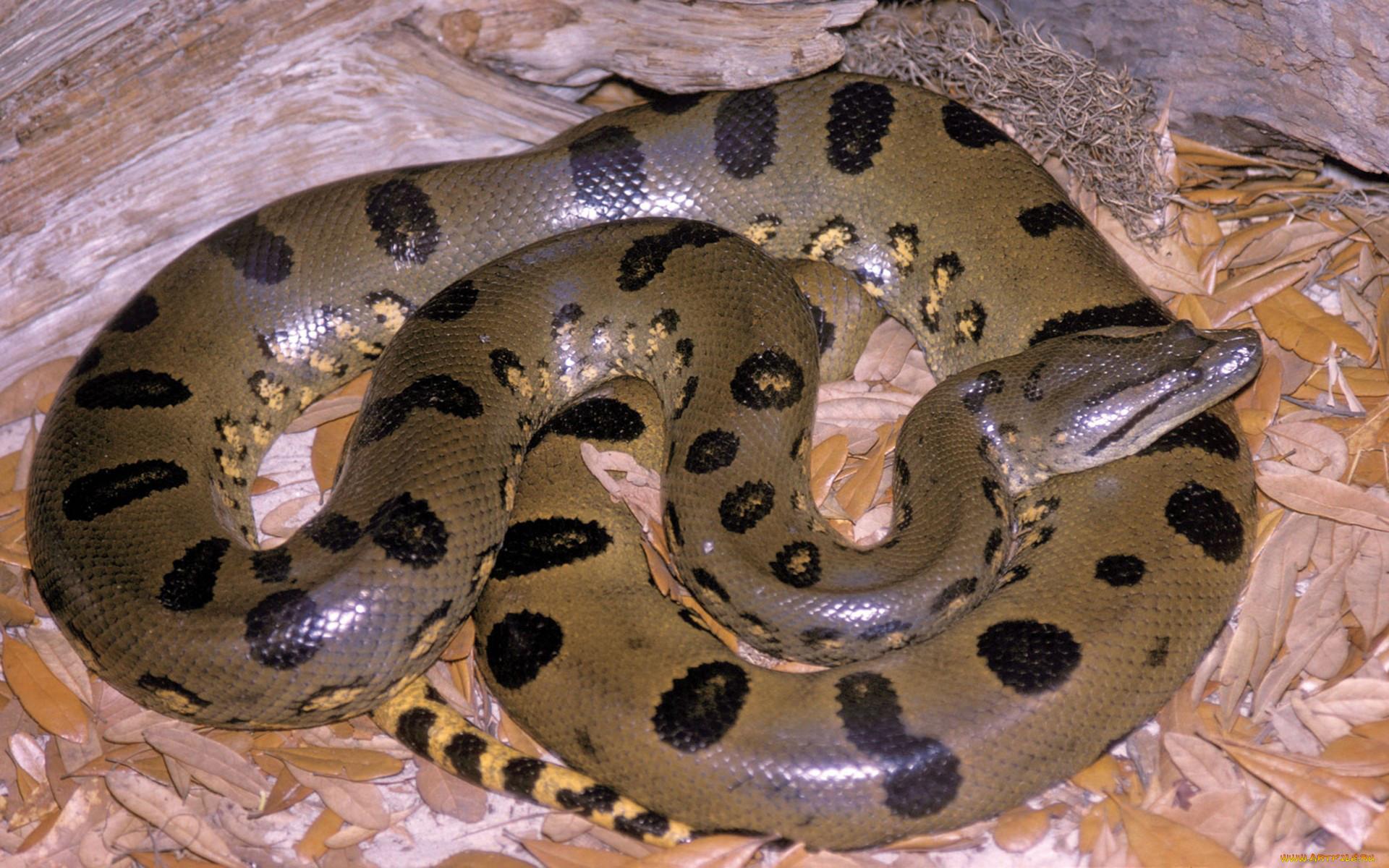 защитный картинки длинная змея светодиодной лентой, спрятанной